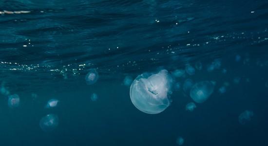 yuzuru-masuda-blue-jellyfish-composition